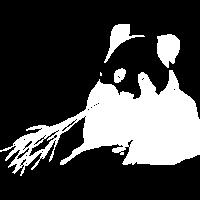 gefaehrdet Tier Baeren Panda weiss