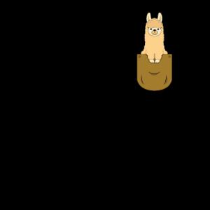 Alpaka Pako Kamel