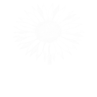 Sunflower - Sonnenblume