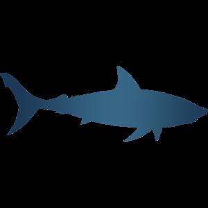 Hai Meer unter Wasser Tier Geschenk