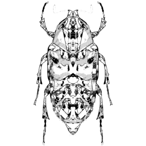 Insekt auf der Rückseite schwarz und weiß