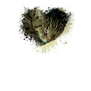Schlafende Katzen sind zum verlieben süß
