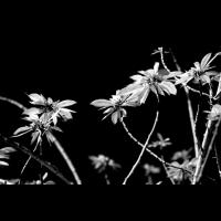 Plantlove