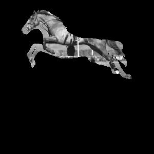 Springpferd - Pferd springt durch die Luft