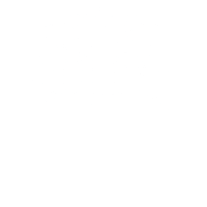 Kuh Kühe Rind