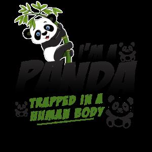 Panda - Kind Kinder Pandabär Bambus süß Geschenk