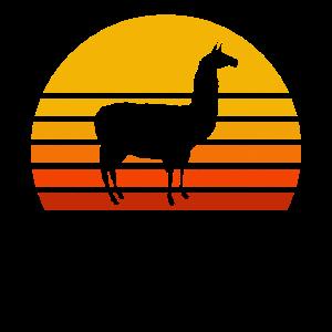 Lama Sonnenuntergang Retro