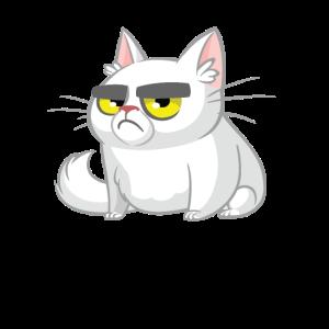 Kätzchen Katzen Katzenauge Katzendame Katzenfreund