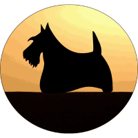 sonnenuntergang scottish terrier