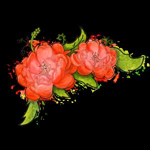 Blumenpfingstrose orange