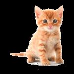 kitten (kopia)