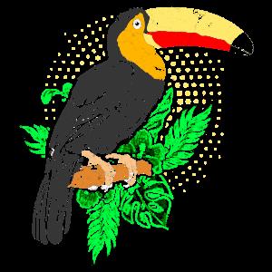 Vogel Urwald Amazonas Regenwald Tukan