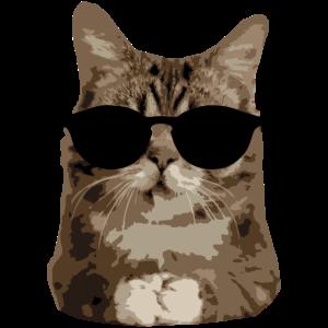 Katze Sonnebrille - chillt