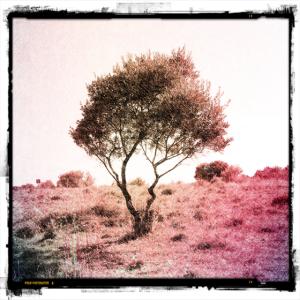 Mediterraner Baum in warmen Sommerfarben