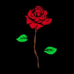 Rose pur
