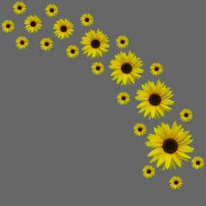 Sonnenblumen, Sonnenblume, Blumen