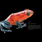 fig5_polygonpfeilgiftfrosch