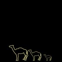 Kamele Pyramide Dromedar camels camel