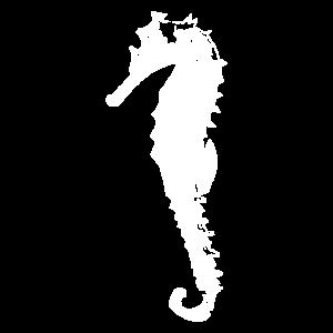Meerestier Seepferd