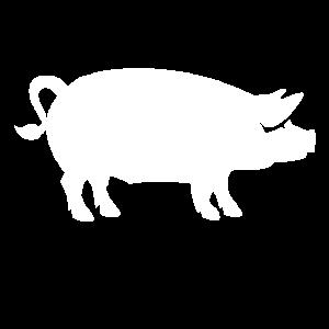 Ein weißes Schwein auf dem Bauernhof