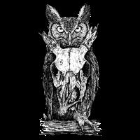 Animal owl skull
