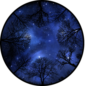 Kosmos Bäume