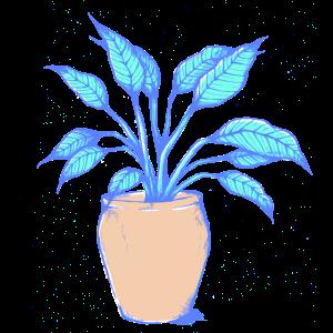 Einblatt Pflanze
