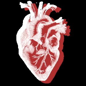 Heartbeat (Weiß)