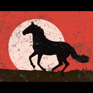 Pferd Hengst Wallach Horizont