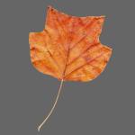 Herbst-Blatt
