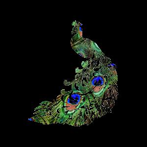 Peacock, Pfau