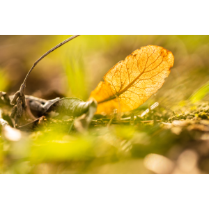 Strukturen im Herbst