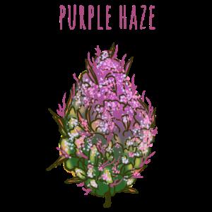 purple haze weed bud Gras kiffen