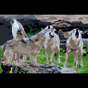 Wölfe Wolfrudel heulen