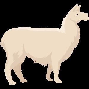 Lama Llama Alpaka Lamas Vikunja Guanako Alpakas