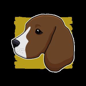 Beagle, Rasse, Hund, Hundekopf, Kopf, Geschenk