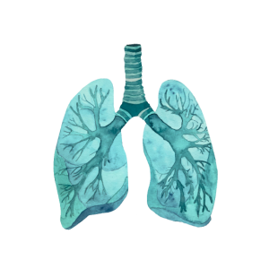Lunge Mediziner