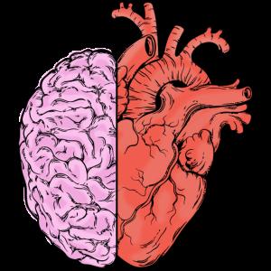 Herz und Gehirn