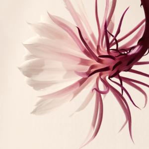 Minimalistische Blume Beige