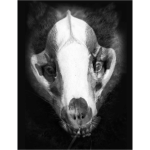 Anti-cull badger