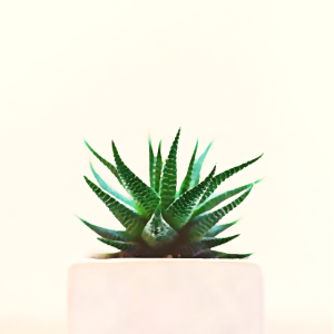 Schlichte Pflanze Minimalismus Aquarell