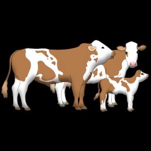 Rinderfamilie bayerisches Fleckvieh