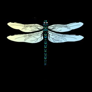 Aqua Libelle T-Shirt Design - Dragonfly Motiv