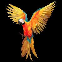 Papagei Federn Aras Vogel Vögel Flügel parrot bird