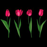 Rosa Tulpen - Frühlingsblumen - Geschenk Ostern