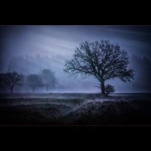 Landschaft Österreich Baum Stimmung Nebel