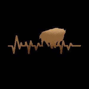 Büffel Puls Herz