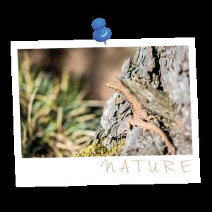NATURE lizard