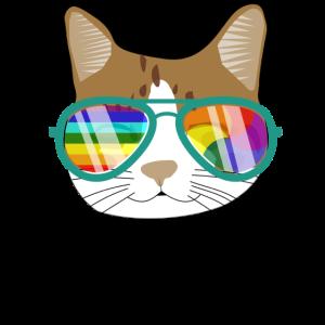 Katze mit Regenbogensonnenbrille