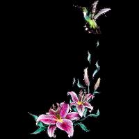 Lielie Blume Kolibri